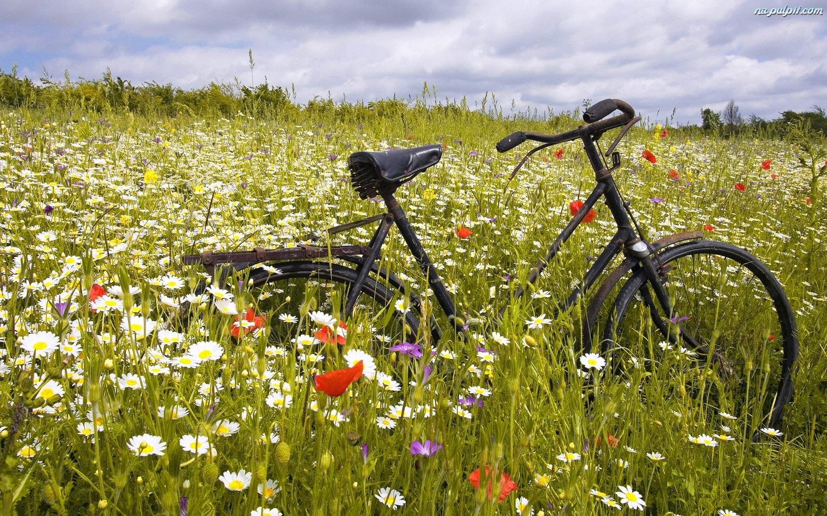Rower, Łąka, Kwiaty